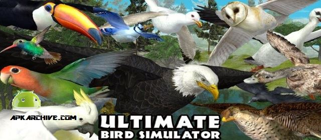 Ultimate Bird Simulator Apk