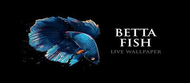 Betta Fish Live Wallpaper Apk